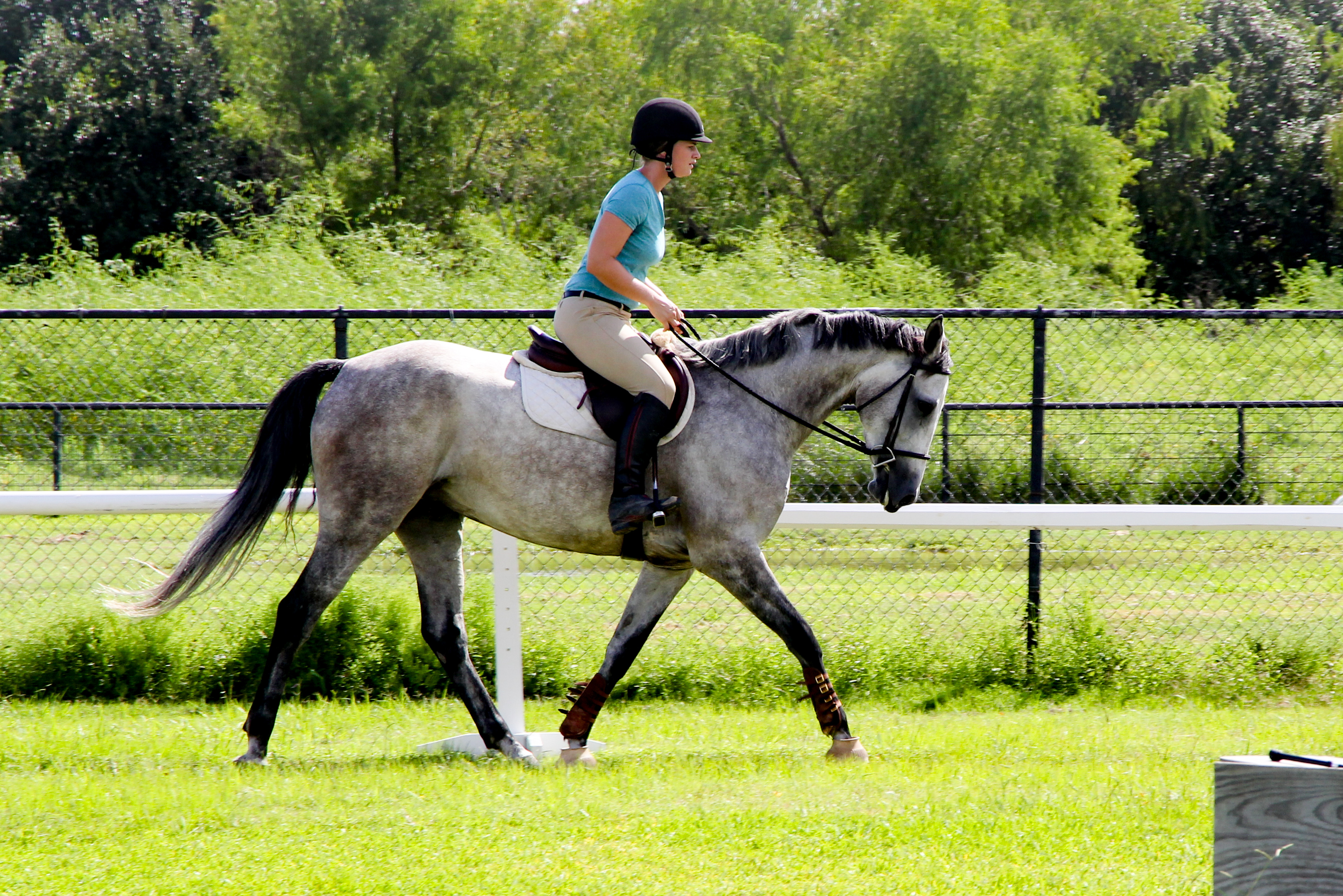 Blackjack Lane Equestrian Hunter Jumper Equitation And Dressage - 12 equestrian places in the us