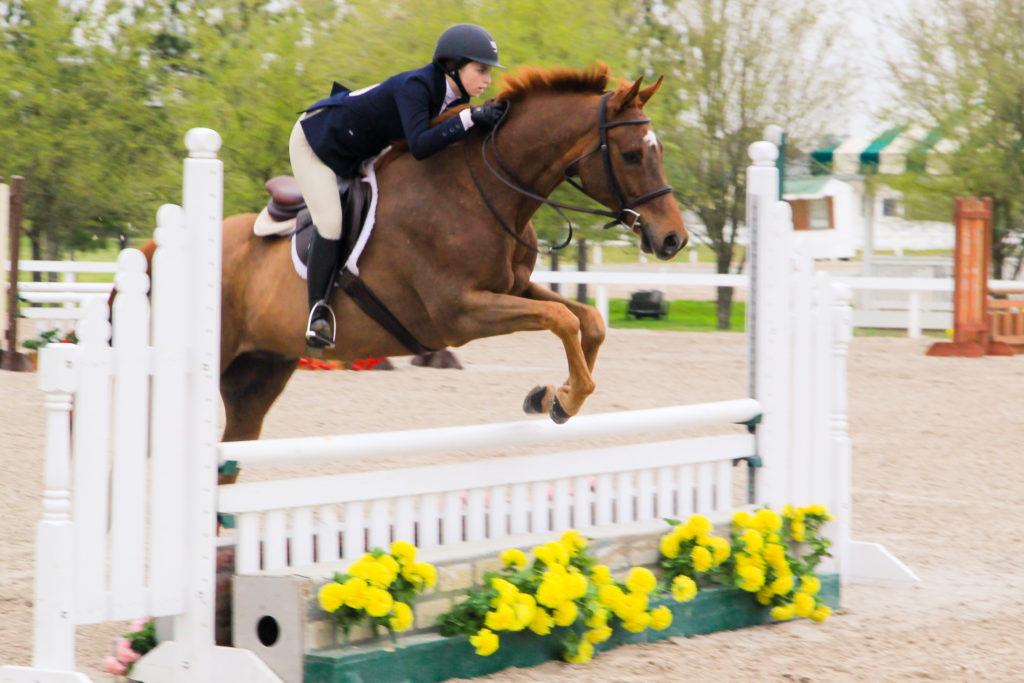Blackjack Lane Equestrian Hunter Jumper Equitation; Boomer